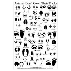 picture about Animal Tracks Printable named 13 Ideal Animal Monitoring Gadget photographs within just 2015 Animal tunes