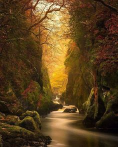 Fairy Glen Gorge, Conwy River, . UNITED KINGDOM --- sun sunset forest tree…