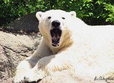 A Polar Bear's 10 Favorite Jokes
