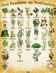 However, when you get a live wreath you may find some of them are going to be very. Garden Deco, Herb Garden, Vegetable Garden, Planting Vegetables, Organic Farming, Organic Gardening, Gardening Tips, Urban Farmer, Green Life