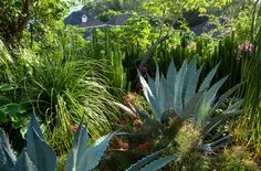 Caribbean garden | Tom Stuart-Smith