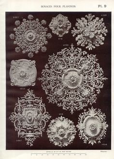 Ceiling roses.