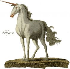 Vintage Unicorn Image -from a rare and early, Circa 1790's, German Natural History Print/Page | The Graphics Fairy