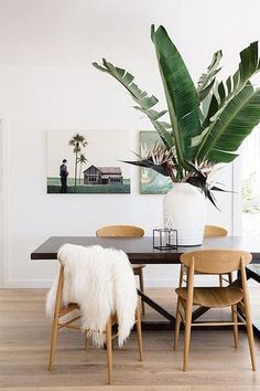 Go Big - An oversized plant can totally transform a simple space into a Jungalow haven.