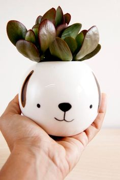 Meet Pepe. He's your succulent's newest home