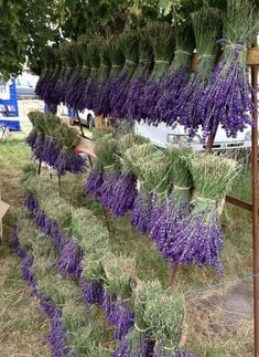 the homestead gardening tips living off the land earth energy one with mother nature save the bees wild child herbology car Lavender Garden, Lavender Fields, Lavender Flowers, Dried Flowers, Lavander, Lavender Blue, Drying Lavender, Roses Garden, Lavender Scent