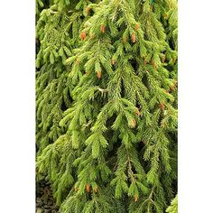 My Wishlist Monrovia Nursery, Sun And Water, Clay Soil, Water Wise, Woodland Garden, Trees And Shrubs, Lawn And Garden, Beautiful Gardens, Evergreen