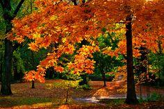Autumn Park, Cleveland, Ohio