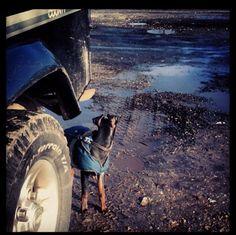 #defender #defender90 #defender110 #defenderitalia #heritage #defender_life_style #defender_for_ever #offroad #4x4 #landrover #landlovers #landroveritalia #searchandrescue #landroverdefender #picoftheday #defenderlove #td5 #td4 #ilovelandrover #leggenda #offroaditalia #offroadlife #extreme #dogs #puppy #beagle #lagotto #dogstagram #puppylove #defenderdogs @rls_land_rover by _defenderdogs_ #defender #defender90 #defender110 #defenderitalia #heritage #defender_life_style #defender_for_ever…