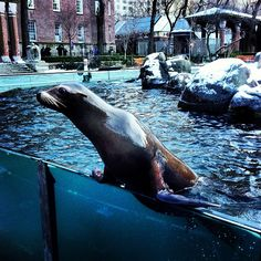 Central Park Zoo: Friday am - Opens at 10 am