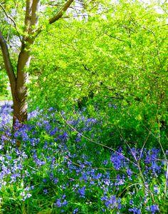 Botanic Gardens, Dublin (Photo by Zuzanne)
