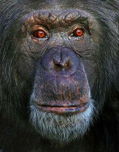 Animal Kingdom Captures : barry steven greff of the wild1