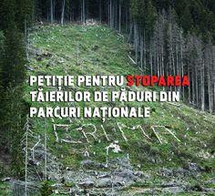 'In acest moment ROMSILVA administreaza toate padurile statului, inclusiv pe cele din parcuri nationale si naturale. Romsilva incaseaza de 10 ori mai multi bani din vanzarea de lemn din parcuri decat investeste in ele. Parcurile Nationale si Naturale ocupa o mica suprafata a Romaniei dar ele sunt cruciale pentru viitorul biodiversitatii si un tezaur de pastrat pentru generatiile viitoare. STOP TĂIERILOR DE PĂDURE DIN PARCURI NAȚIONALE https://www.agentgreen.ro/stop-taieri/