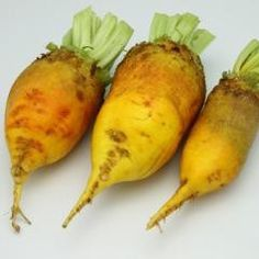Giant Yellow Eckendorf Beet - Heirloom Vegetable Seeds