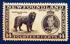 #timbre #stamp #znamky #philatelie #philately #filatelia For Sale Sign, Newfoundland, Stamp, Animals, Door Bells, Animales, Animaux, Stamps, Newfoundland Dogs