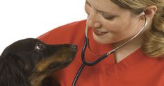 Dedicated to diagnosis and treatment of skin diseases and allergies in animals