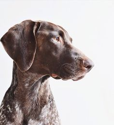 Breed Showcase: Gus of If It Wags | The Pet Anthology