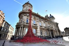Image result for hull poppy display