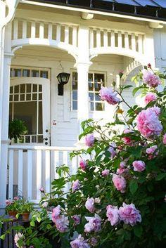 vackra rosor I Sweden