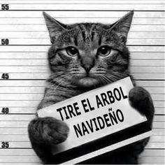 Culpable #Gatos