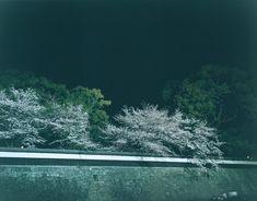 Rinko Kawauchi | The river embraced me
