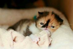 am feverish :(