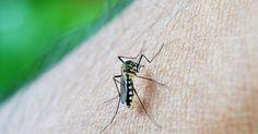 Morador do Ana Jacinta é 4ª vítima da dengue no ano em Pres. Prudente