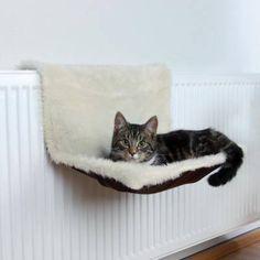 Выбираем лежаки для кошек