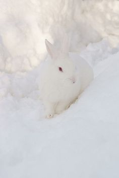 White rabbit ~ 'Follow your dreams' ~ Alice