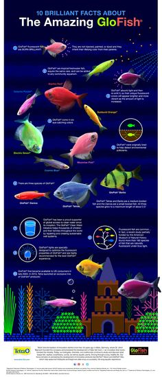 10 Brilliant Facts About The Amazing GloFish® Infographic.  #glofish # tetraglofish  #aquariumtips