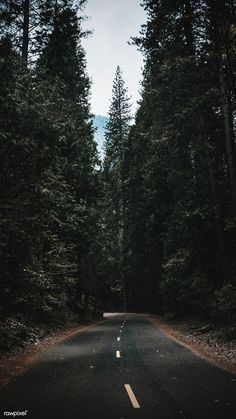 Download premium image of Road passing through the Yosemite National Park mobile screen wallpaper by Teddy about forest, road trip, Nature wallpaper, travel, and california 1221341