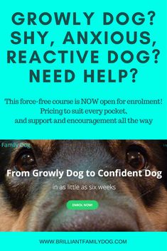 Dog Behavior Premium Online Course with full support, to guide you to a new - force-free - way to change your reactive dog and enjoy walks again - just as you planned when you got your dog! Dog Training Books, Dog Training Courses, Dog Training Tips, Training Online, Potty Training, Reactive Dog, Dog Minding, Aggressive Dog, Family Dogs