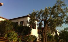 House among the ancient olive trees just few meters from the sea