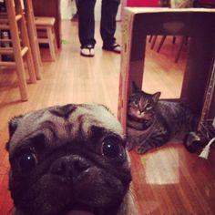 epic cat photobombs - Google Search