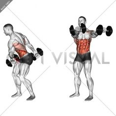 Full Body Dumbbell Workout, Oblique Workout, Gym Workout Videos, Abs Workout Routines, Back Workout Bodybuilding, Chest Workouts, Gym Workouts For Men, Conditioning Workouts, Weight Training Workouts