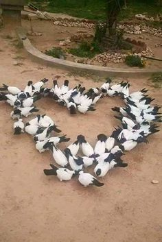 Animals can say soo much without even speaking Heart In Nature, Heart Art, I Love Heart, Happy Heart, Beautiful Birds, Beautiful Pictures, Beautiful Hearts, Heart Images, Heart Pics