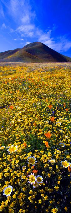 ✯ California Dreaming - Carrizo Plain, California