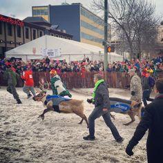 Running of the Reindeer – Anchorage, Alaska