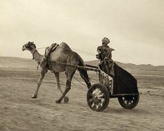 war chariot camels - Yahoo Image Search Results
