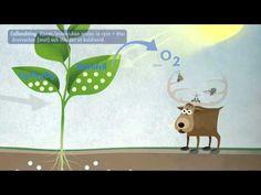 Fotosyntes och cellandning (NO) - YouTube