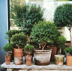 Gardening Containers 15 Unique and Beautiful Container Garden Ideas-Topiaries-Topiary-Clay Pots Garden Cactus, Garden Trees, Large Garden Pots, Citrus Garden, Potted Garden, Succulents Garden, Indoor Gardening Supplies, Gardening Tips, Organic Gardening