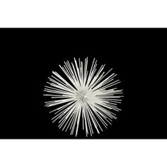 Majestic Medium Sea Urchin Ornamental Decor - White - Benzara