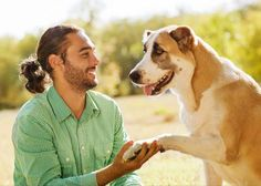 Natural treatment of wounds, incisions, hotspots, bee stings, insect bites and more - Dr. Dog Travel Carrier, Stop Puppy From Biting, Dog Stock Photo, Easiest Dogs To Train, Bee Sting, Man And Dog, Insect Bites, Dog Training Tips, Dog Owners