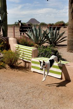 Catamaran Green / White Striped Outdoor Area Rug