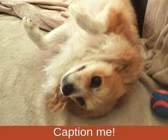 We think Loki is trying to tell us something. Help us caption this photo. #captionme #tailoredpetservices #petsitting #doglife #bestwoof #lovedogs #dogwalking #lovepets #doglovers #dogsitters #dogwalk #washingtondogs #dogstagram #petstagram #instapet #instapup #instawoof #instadog #activedogsofinstagram #dogsofig #dogsofinstagram #petstagram #pupstagram #cutenessoverload