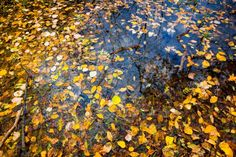 Leaf covered forest pond - free stock photo #freeimages