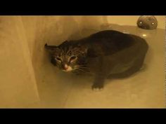 My cat McLovin meows from underwater while I'm giving him a bath. Yes, his name is McLovin. I get a lot of questions about that. Before you comment and rejoi...