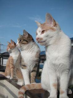3 cats sunning sun