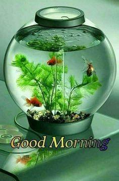 Good Morning Sister, Good Morning Msg, Good Morning Handsome, Good Morning Coffee, Good Morning Sunshine, Good Morning Picture, Good Morning Messages, Good Morning Greetings, Good Morning Images Flowers