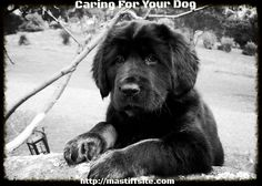 Breeders Best Tips On Training Your New Dog